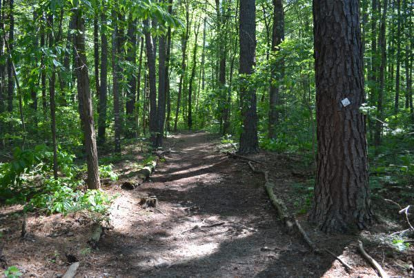 a shady hiking trail with many trees
